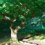 4body4soul Tree
